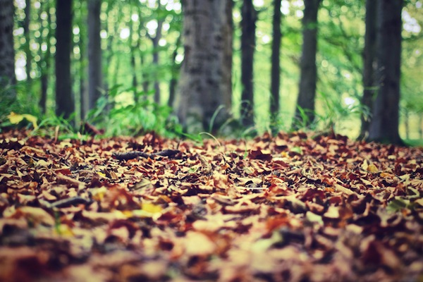 autumn-leaves Tips Ngeblog 8: 10 Website Foto Gratis Yang Wajib Kamu Tahu!